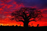 African baobab tree, Tarangire National Park, Tanzania Fine-Art Print