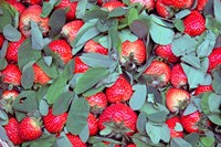 China, Chongqing, Strawberries in fruit market Fine-Art Print