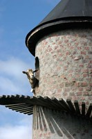 Fairview winery, goat tower, Paarl, South Africa Fine-Art Print