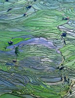 Flooded Tiger's Mouth Terraces, Yuanyang, Yunnan, China Fine-Art Print