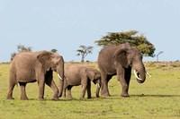 Three African Elephants, Maasai Mara, Kenya Fine-Art Print