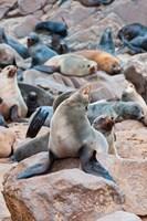 Cape Fur seals, Cape Cross, Skeleton Coast, Kaokoland, Namibia. Fine-Art Print