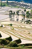 Flooded Ai Cun Rice Terraces, Yuanyang County, Yunnan Province, China Fine-Art Print