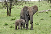 Female African Elephant with baby, Serengeti National Park, Tanzania Fine-Art Print