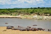Hippopotamus, Mara River, Serengeti NP, Tanzania Fine-Art Print