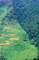 Abutting Agricultural Development, Uganda Fine-Art Print