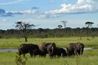 Elephant, Zimbabwe Fine-Art Print