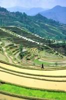 China, Yunnan, Yuanyang Co, Rice Terraces, Mount Ailo Fine-Art Print