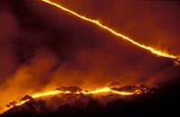 Forest Fire, Gombe National Park, Tanzania Fine-Art Print