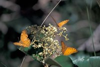 Butterflies, Gombe National Park, Tanzania Fine-Art Print