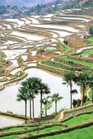 Asia, China, Yunnan Province, Jiayin. Flooded Terraces Fine-Art Print