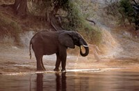 Elephant at Water Hole, South Africa Fine-Art Print