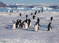 Adelie Penguins, Devil Island, Antartica Fine-Art Print