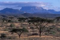 Acacia and Distant Massif North of Mt Kenya, Samburu National Reserve, Kenya Fine-Art Print