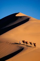 Camel Caravan with Sand Dune, Silk Road, China Fine-Art Print