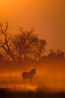 Burchell's Zebra at Sunset, Okavango Delta, Botswana Fine-Art Print