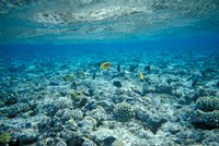 Crystal Clear Waters and Sea Life of the Red Sea, Egypt Fine-Art Print