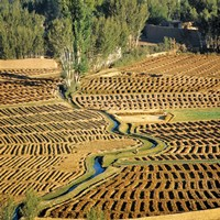 Afghanistan, Bamian Valley, Farmland and irrigation Fine-Art Print