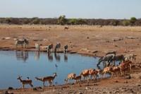 Africa, Namibia, Etosha. Black Faced Impala in Etosha NP. Fine-Art Print