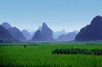 Farmland with the famous limestone mountains of Guilin, Guangxi Province, China Fine-Art Print