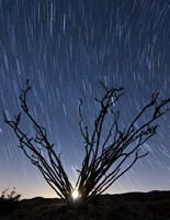 The setting moon is visible through the thorny branches on an ocotillo, California Fine-Art Print