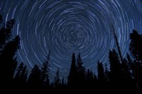 Star trails and a meteor above pine trees in Lassen Volcanic National Park Fine-Art Print