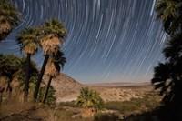 California Fan Palms and a mesquite grove in a desert landscape Fine-Art Print