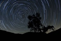 A lone oak tree silhouetted against a backdrop of star trails Fine-Art Print