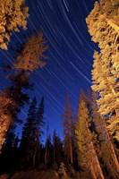 Star trails above campfire lit pine trees in Lassen Volcanic National Park Fine-Art Print