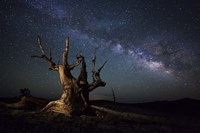 The Milky Way and a dead bristlecone pine tree in the White Mountains, California Fine-Art Print