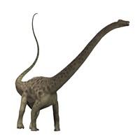 Diplodocus dinosaur Fine-Art Print