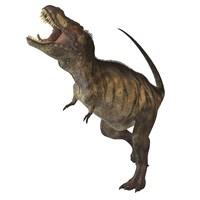 Tyrannosaurus Rex Fine-Art Print