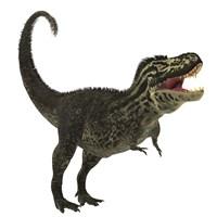 Tyrannosaurus Rex, a large predatory beast of the Cretaceous period Fine-Art Print