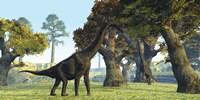 Brachiosaurus dinosaurs walk among large trees in the prehistoric era Fine-Art Print