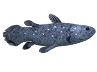 Coelacanth fish against white background Fine-Art Print