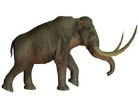The Columbian mammoth, an extinct species of elephant Fine-Art Print