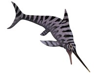 Eurhinosaurus, an extinct genus of ichthyosaur Fine-Art Print