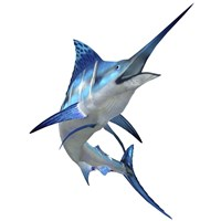 Blue Marlin Fine-Art Print