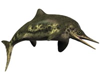 Stenopterygius was an ichthyosaur from the Jurassic Period Fine-Art Print