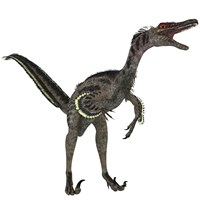 Velociraptor, a theropod dinosaur from the late Cretaceous Period Fine-Art Print