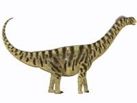 Camarasaurus was a sauropod dinosaur that lived during the Jurassic Age Fine-Art Print