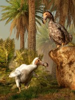 A pair of Dodo birds play a game of hide-and-seek Fine-Art Print