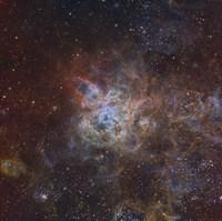 The Tarantula Nebula Fine-Art Print