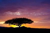 Kenya, Masai Mara. Sunrise silhouette, acacia tree Fine-Art Print