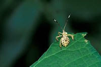 Insect on Green Leaf, Gombe National Park, Tanzania Fine-Art Print