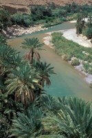 Lush Palms Line the Banks of the Oued (River) Ziz, Morocco Fine-Art Print