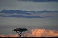 Lone Acacia Tree, Masai Mara Game Reserve, Kenya Fine-Art Print