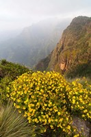 Yellow flowers, Semien Mountains National Park, Ethiopia Fine-Art Print