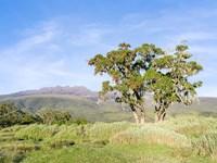 Mount Kenya NP, Site in the highlands of central Kenya, Africa. UNESCO Fine-Art Print
