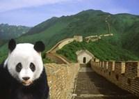 Panda at the Great Wall of China Fine-Art Print